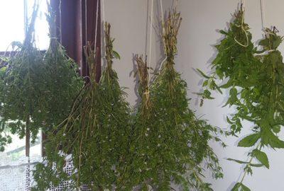 Сушене на билки